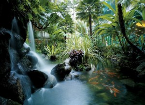3waterfall_koi_pond